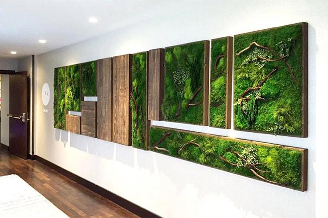 quadros botanicos expostos