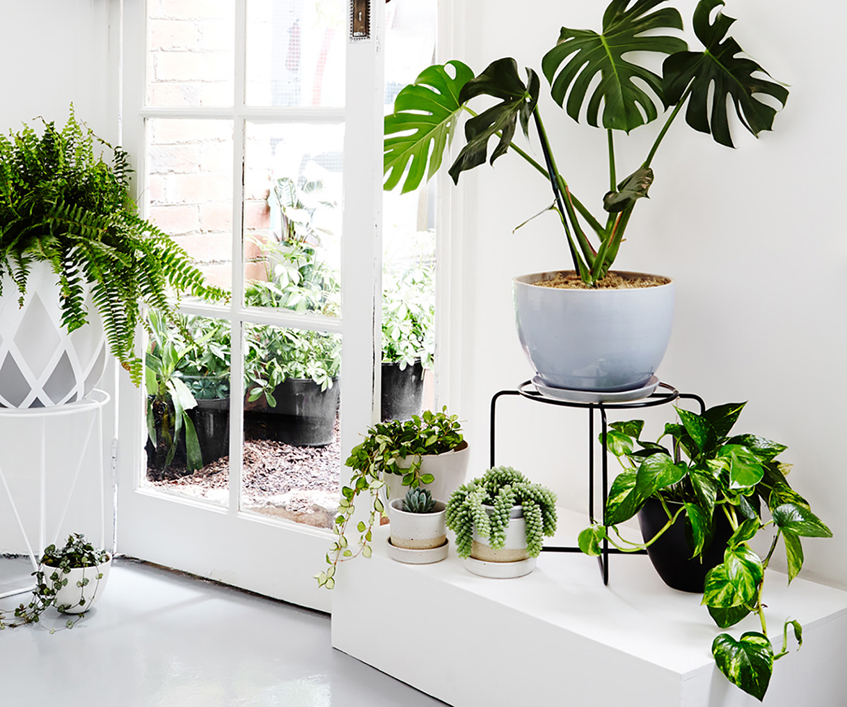 Plantas para decorar ambientes internos blog escudero co - Plantas para decorar ...