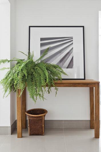 Planta Samambaia na decoração da sala