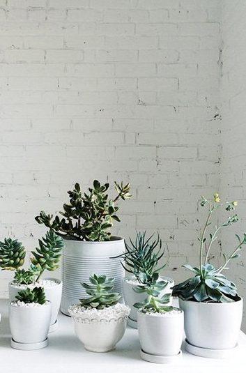 Plantas Suculentas para decorar ambientes internos