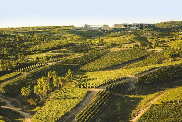 vinícola bodega garzón no uruguai