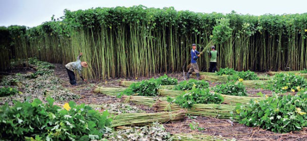 projeto sustentável na amazônia escudero